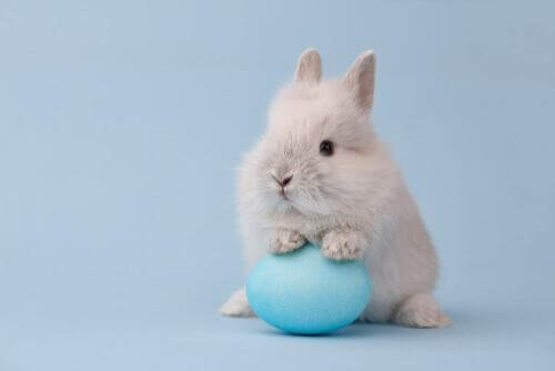 Coniglio nano con palla celeste