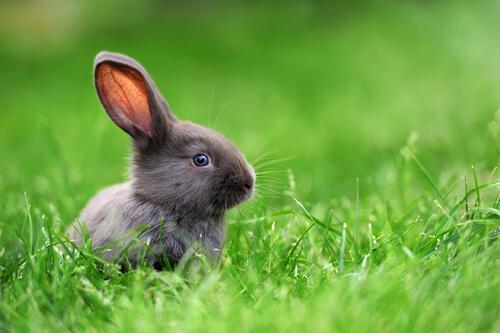Coniglio nano in mezzo al prato