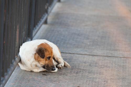 Cosa fare se avete perso il vostro animale?