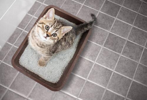 Cucciolo di gatto dentro lettiera