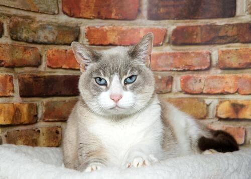 La demenza senile nei gatti: di cosa si tratta?