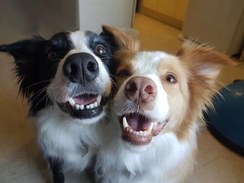 Due cani vicini