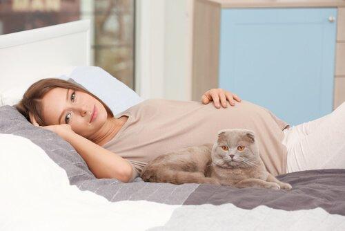 Convivenza tra donne in gravidanza e gatti