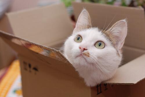 Gatto dentro scatola di cartone