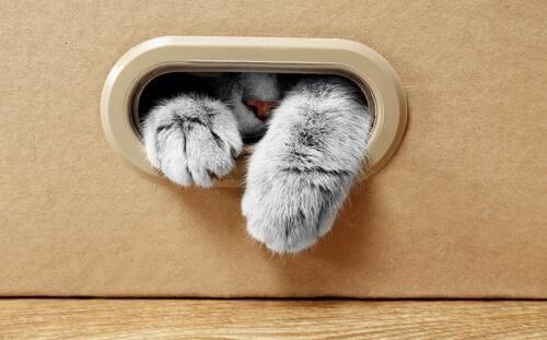 Perché il vostro gatto ama tanto le scatole di cartone?
