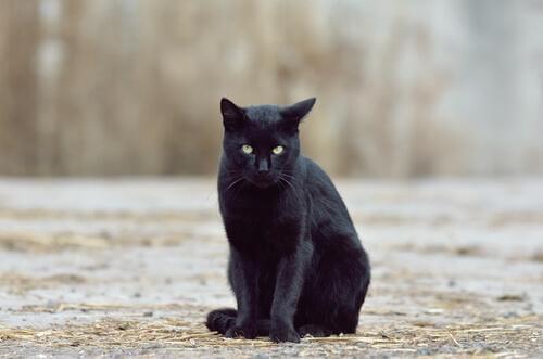 Gatto nero seduto per strada