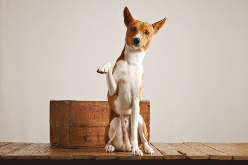 Il cane può usare una lettiera per i propri bisogni?