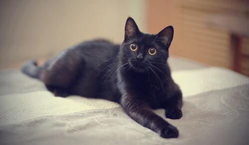 Conosciamo insieme il mito del gatto nero