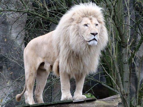 5 animali selvatici che non avete mai visto
