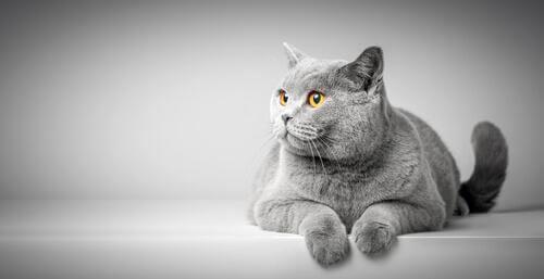 Il linguaggio corporeo dei gatti