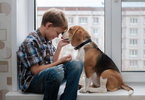 Ecco tutto quello che c'è da sapere sul Beagle