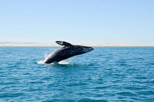 Scoperte delle balene estinte sulle coste spagnole