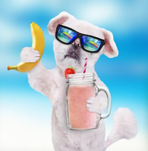 Smoothie cani banana
