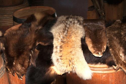 Finalmente terminerà il commercio delle pellicce
