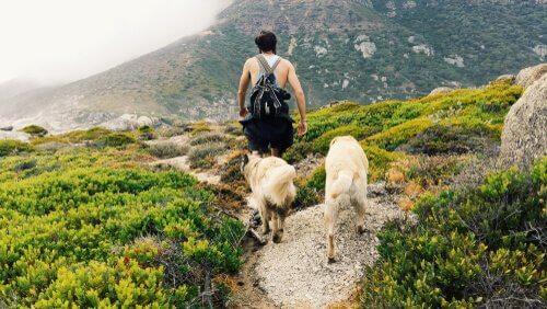 Uomo con cani nella natura