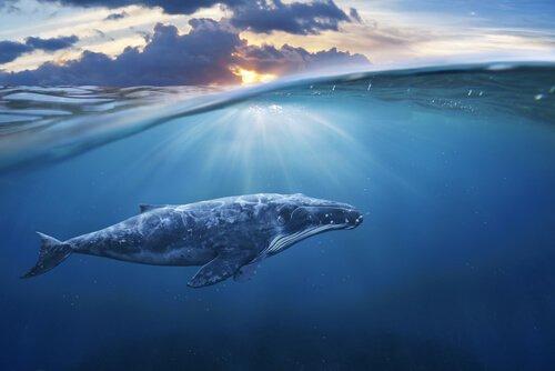 Lo stress delle balene durante la seconda guerra mondiale