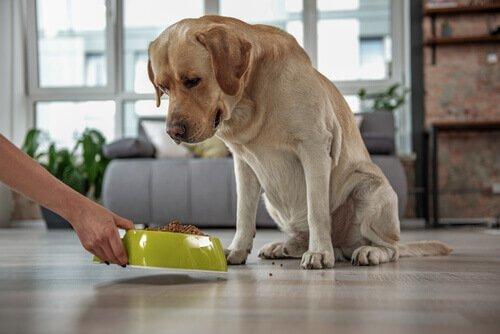 Il tuo animale domestico ha il colesterolo alto?