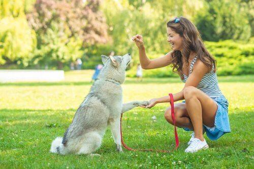 Come educare il cane