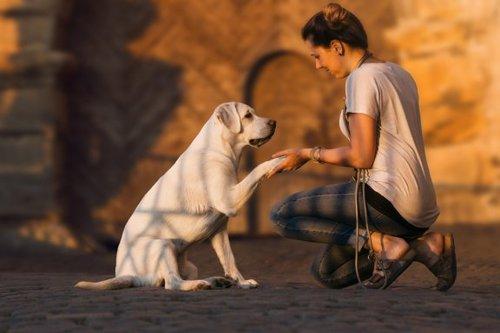 Come addestrare un cane sordo