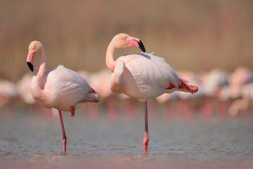 I 5 animali con le zampe più lunghe