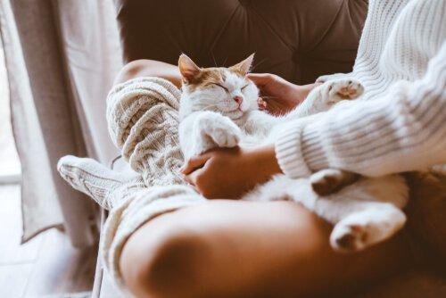 Sensibilità gatto