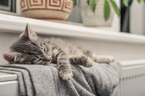 I gatti percepiscono le energie delle persone?