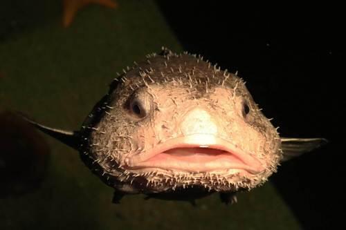 Habitat del pesce blob
