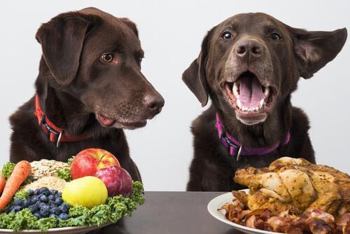 I cani possano essere vegani?