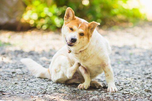 Come prevenire i parassiti in cani e gatti