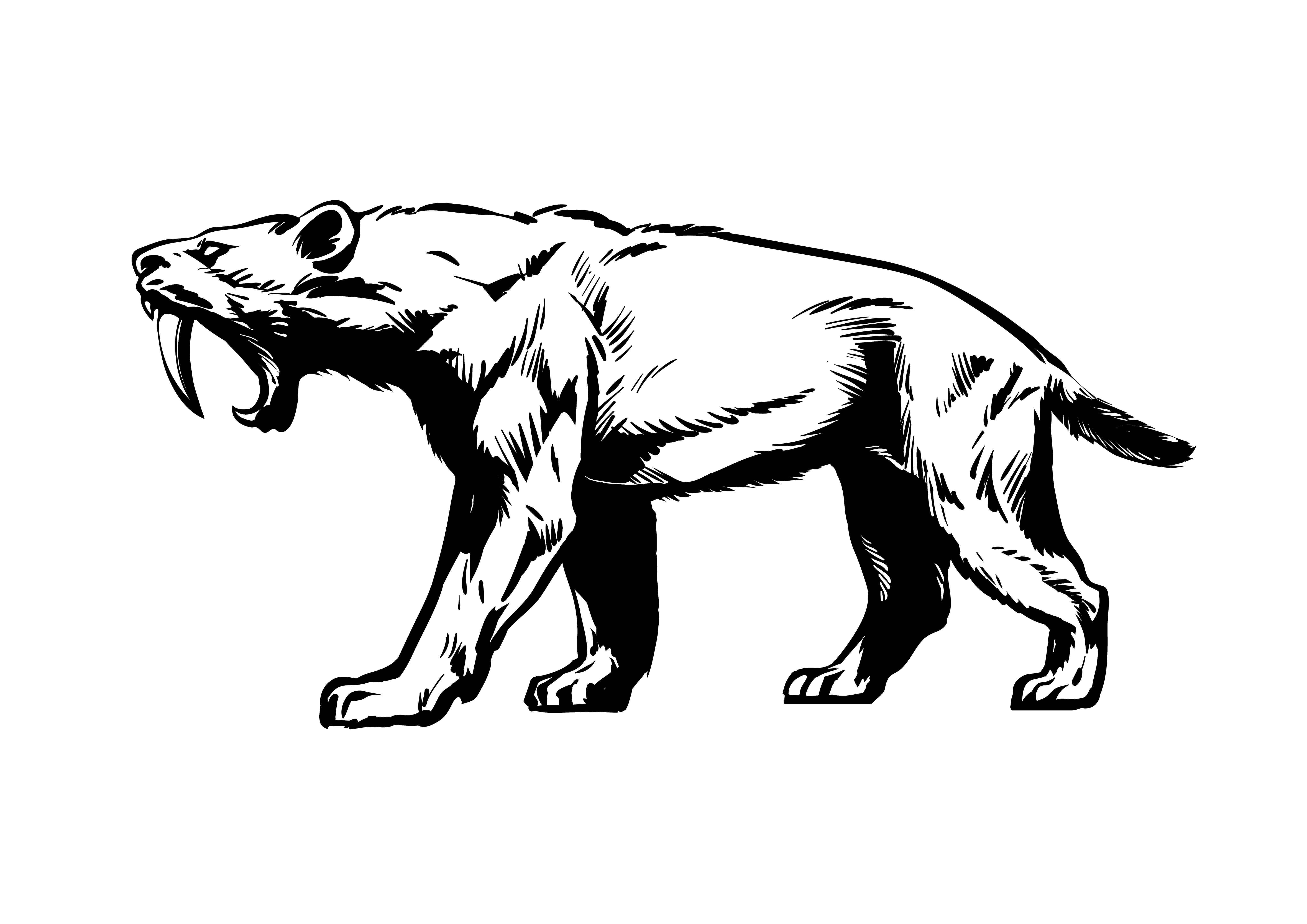 Disegno di Smilodon