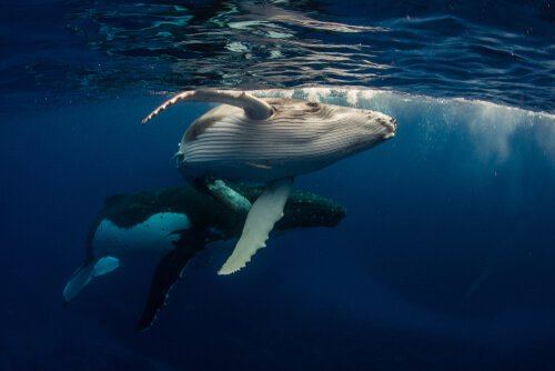 Stress delle balene