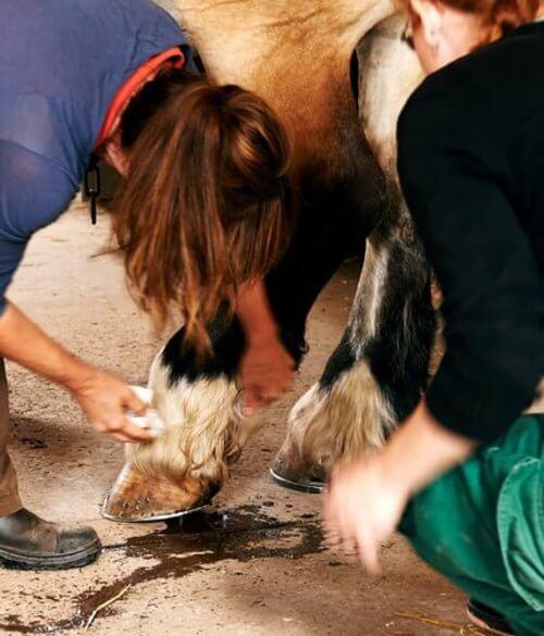 Vaccino anti-tetano cavallo