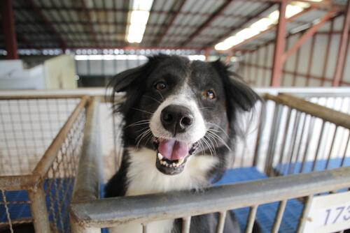 Adottare un cane abbandonato: aspetti da considerare