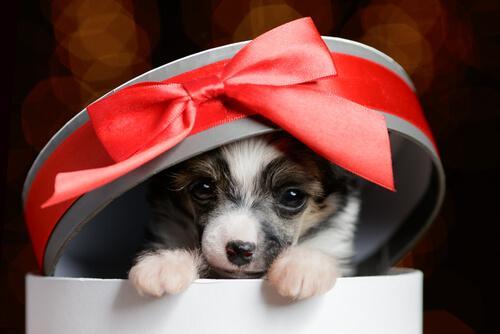 Regalare un animale domestico: 4 consigli