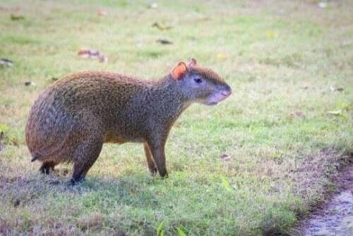 5 animali caratteristici del Centro America