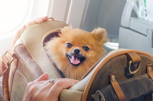 viaggiare con gli animali domestici