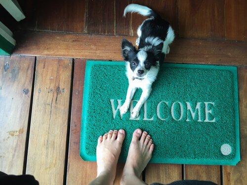 Come fare se il cane salta addosso alle persone?