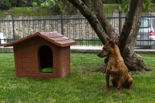 Cagnolino sul prato accanto a casetta per cani