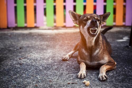 Cane aggressivo nel recinto colorato