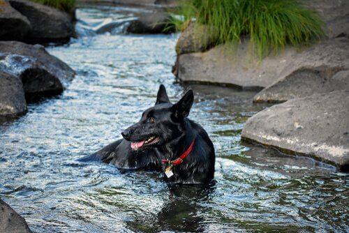 Posso portare il mio cane al fiume?