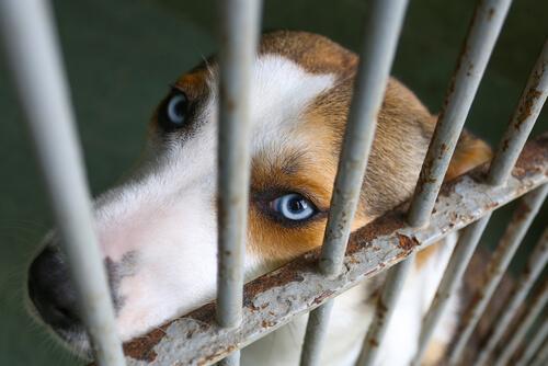 Cane con il muso appoggiato alla gabbia