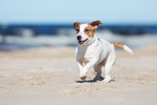cane che corre libero in spiaggia