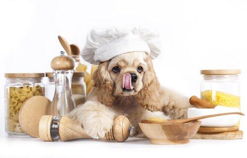 Cane che cucina la pasta