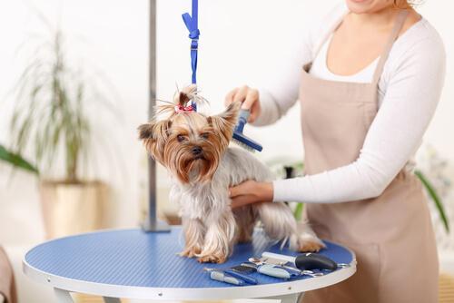 Cane che viene spazzolato da donna