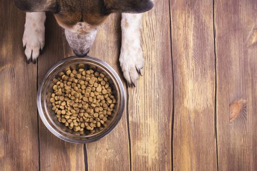 Consigli per conservare correttamente il cibo per cani