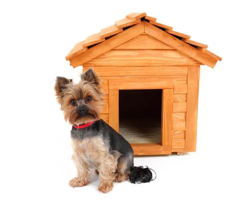 Cane davanti a cuccia di legno
