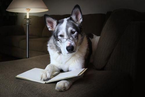 Cane con gli occhiali e con libro