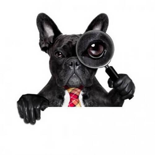 Ecco alcune curiosità scientifiche sui cani