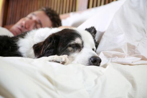 Cane dorme con padrone
