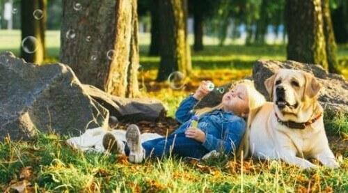 Scoprite con noi 5 razze di cani tranquilli